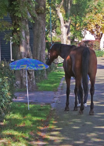 parasol paard niet eng gras schriktraining