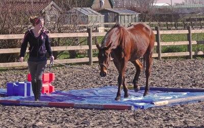 schriktraining zeil balken paard