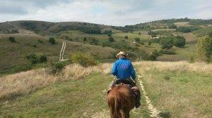 Heuvels italië paard