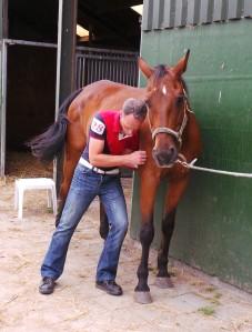 paard massage reinoud koppert