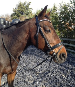Hoofdstel neusriem frontriem paard
