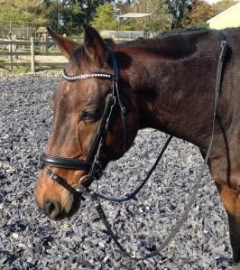 hoofdstel frontriem bling paard