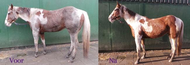 voor en na modder paard paint schoon