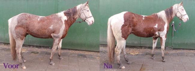 borstelen schoonmaken paard