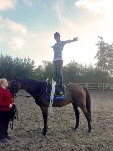 voltige staan paard voltigesingel