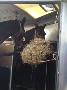 paarden in trailer hooinet
