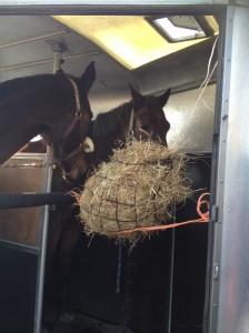 paarden in trailer hooinet