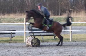 paard boomstam springen