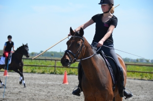 clinic working equitation festival