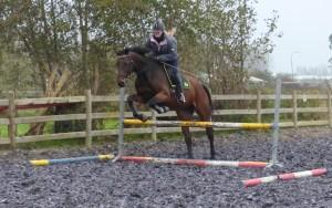springen paard hindernis