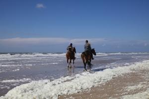 paarden op strand branding zon