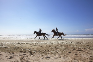 paarden galop strand branding