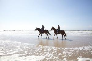 branding paarden strand