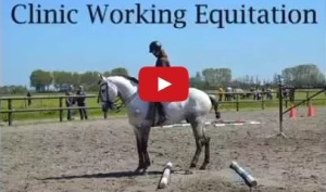 filmpje working equitation