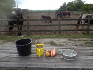 ingrediënten paardentaart taart voor paard