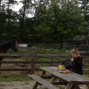 paarden taart maken