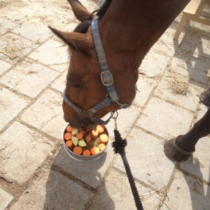 paard eet paardentaart