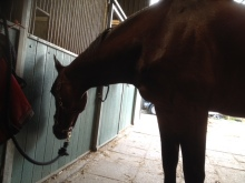 slapend paard