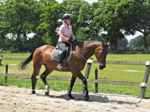 paard kwpn neckrope