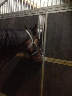 paard vasten muilkorf kliniek