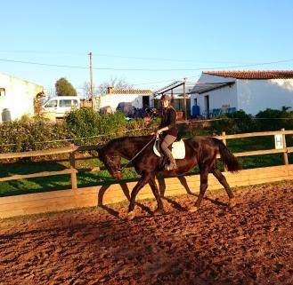 dressuurpaard portugal
