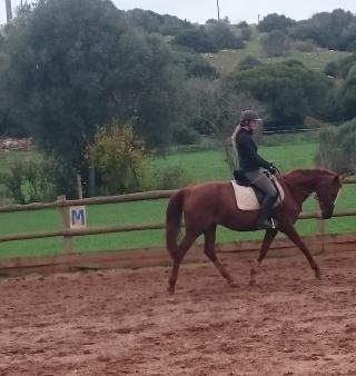 dressuur bak pony