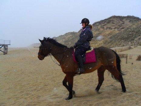 paard strand sneeuw